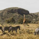 Visa Requirements To Go to Kenya