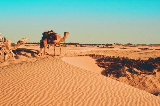 deserts of North Africa